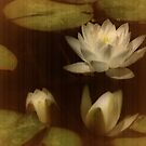 Water Lilies by Barbara  Brown