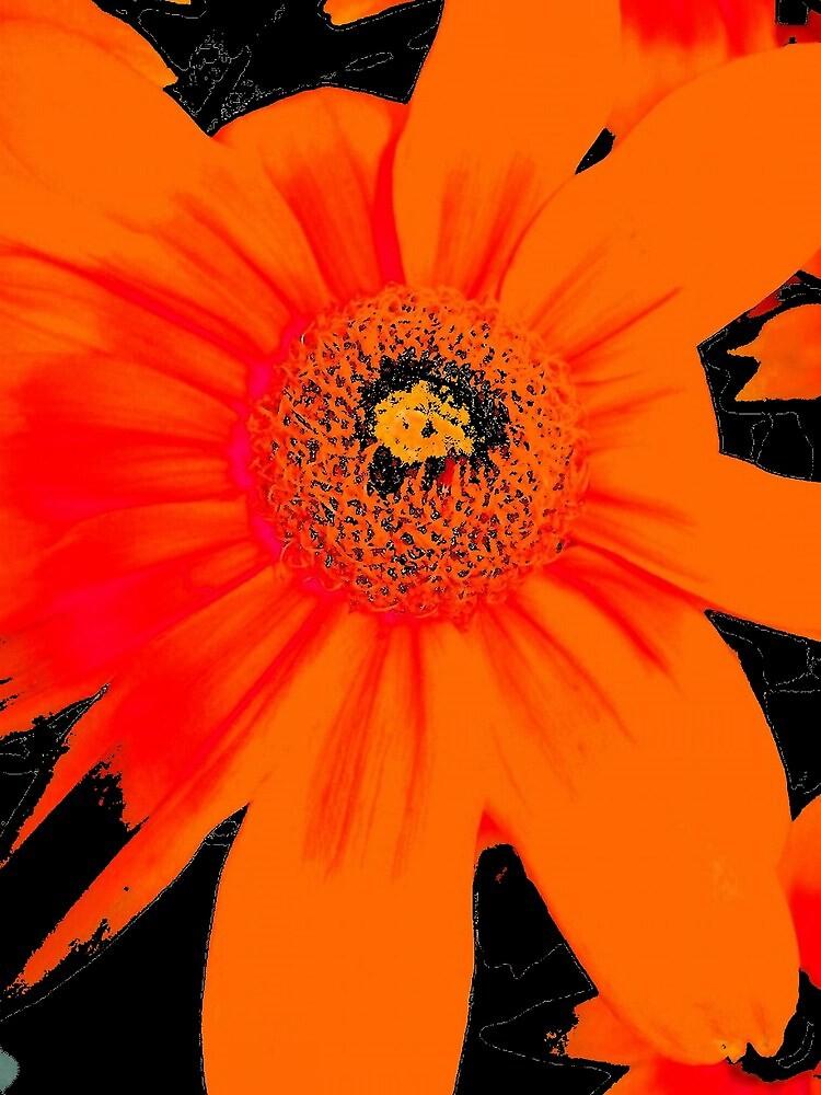 floral 1720 by Chuck Landskroner