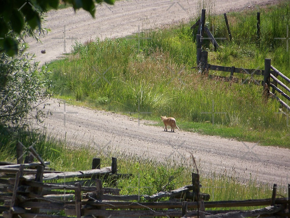 A Country Stroll by Betty  Town Duncan