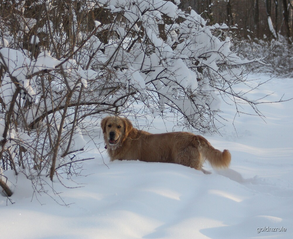 Snowy Branches Doggie Cave- Osiris 09 by goldnzrule