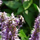 Bee On Purple Flower by tomeoftrovius