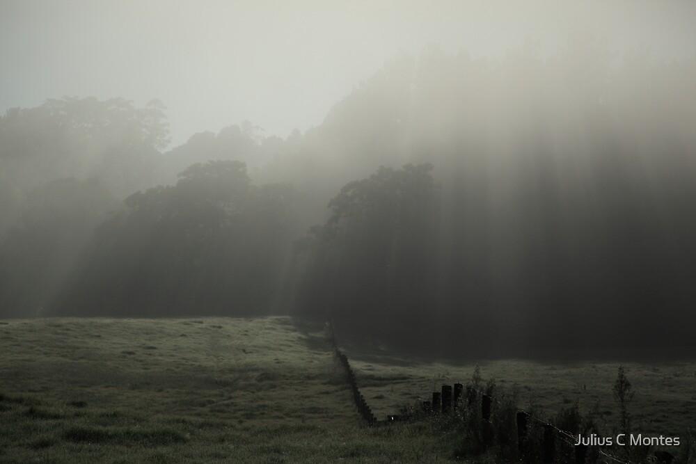 Rain Light by Julius C Montes