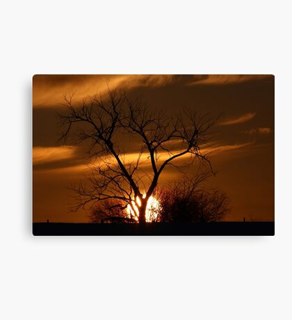 Fireball Sunset tree Canvas Print