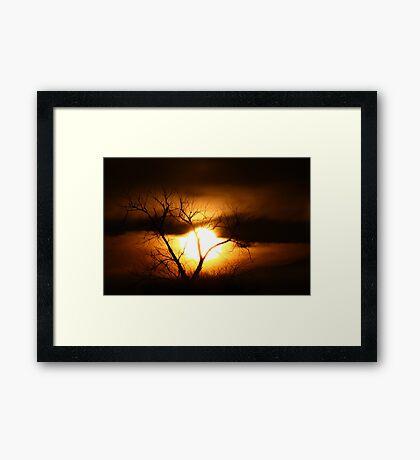 Gloom - Tree Framed Print