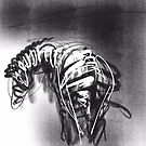 zebra by leonarto