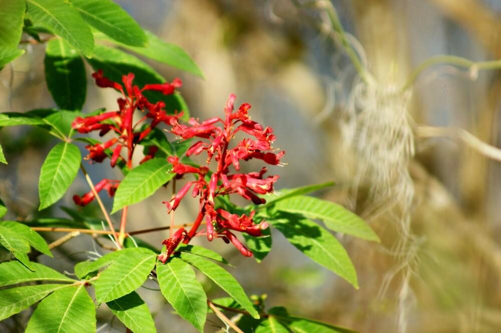 Nature's Beauty by Linda Yates
