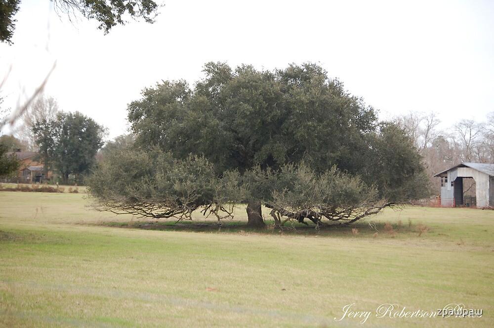 Heavy Oak by zpawpaw