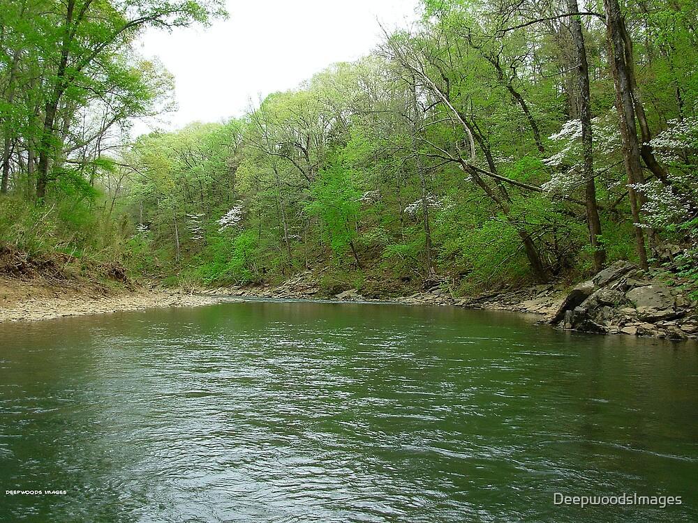 Wild Dogwoods on Lee Creek, Oklahoma by DeepwoodsImages