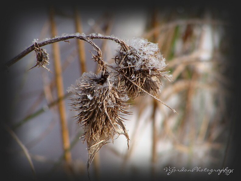 In the Bleak Winter Cold by vigor