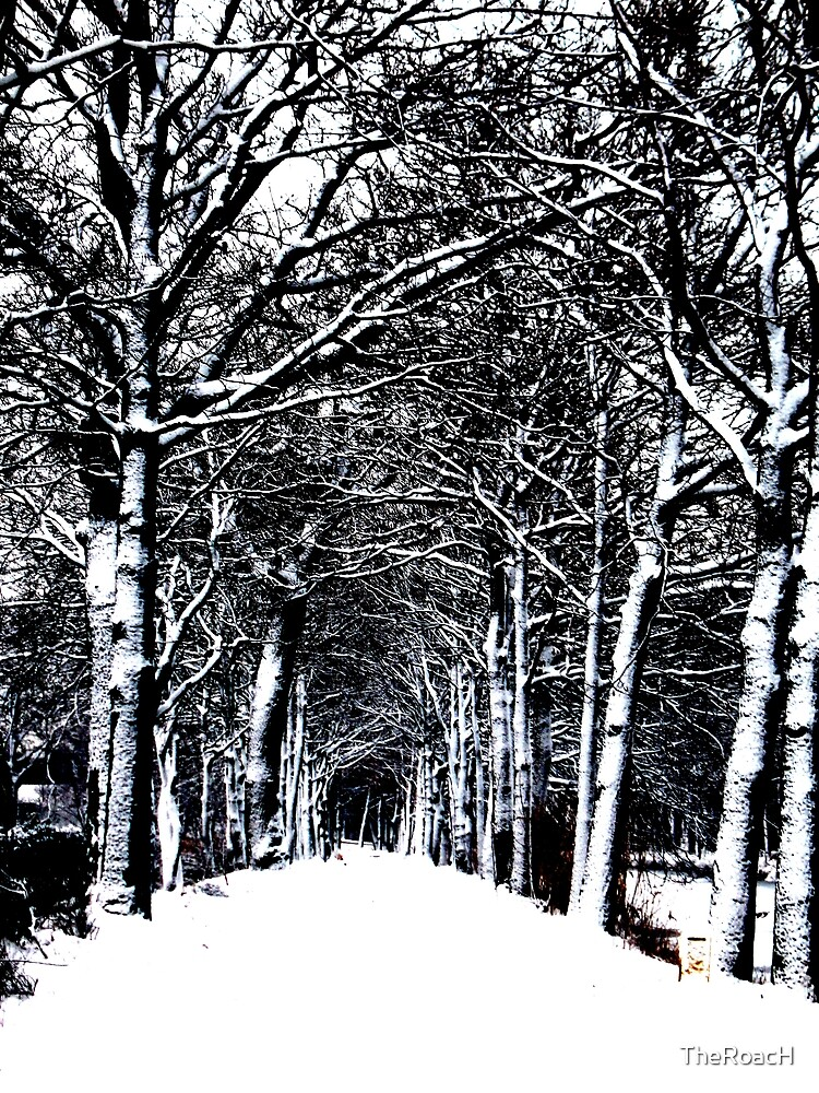 Snow Road by TheRoacH