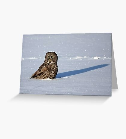 Great Grey Owl casts a long shadow Greeting Card