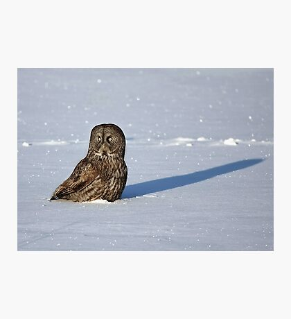 Great Grey Owl casts a long shadow Photographic Print
