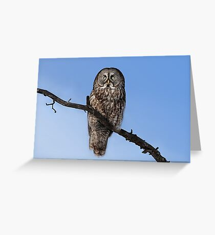 Great Grey owl sits in his perch Greeting Card