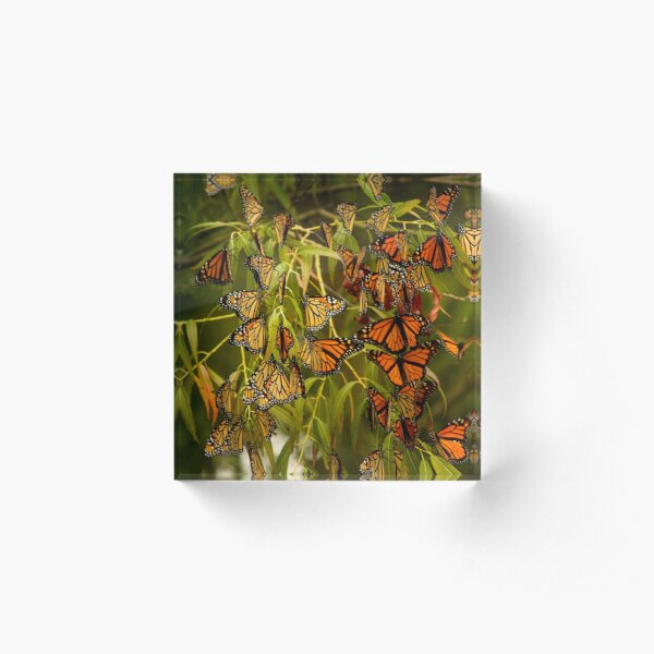 Monarch butterflies migration Acrylic Block