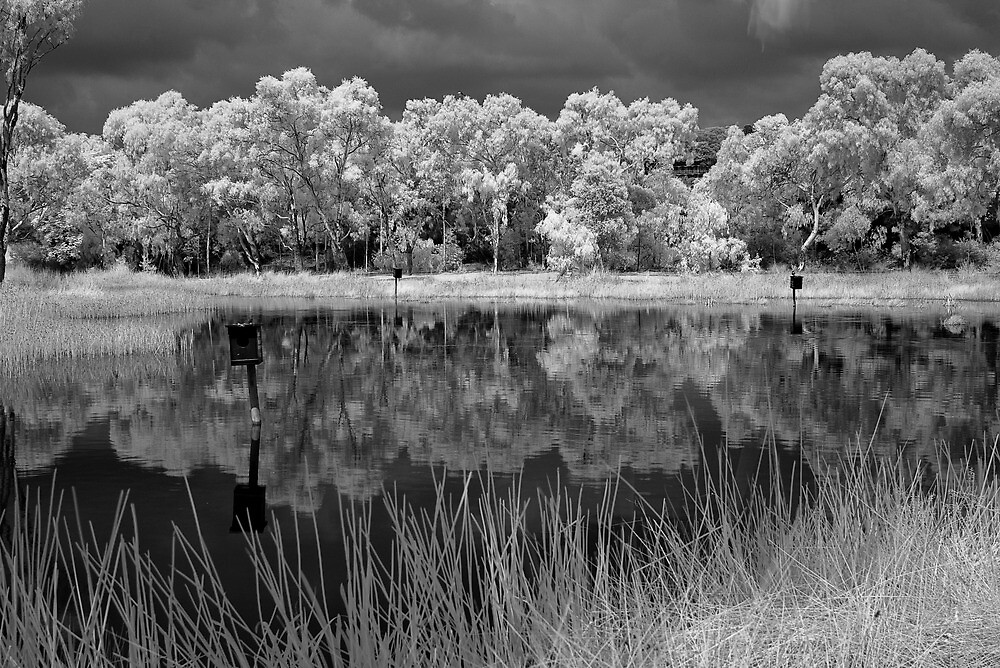 Pond by Akif  Kaynak