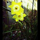 Ol' Daffodil Me. by TwistedHearts
