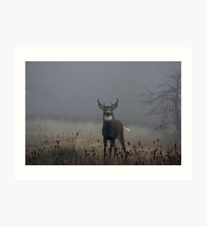 Big Buck - White-tailed Deer Art Print
