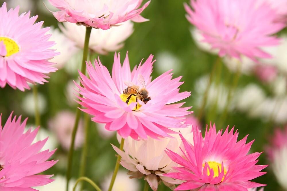 Bee by wattsy6025