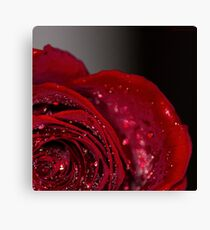 Red Rose macro 2 Canvas Print