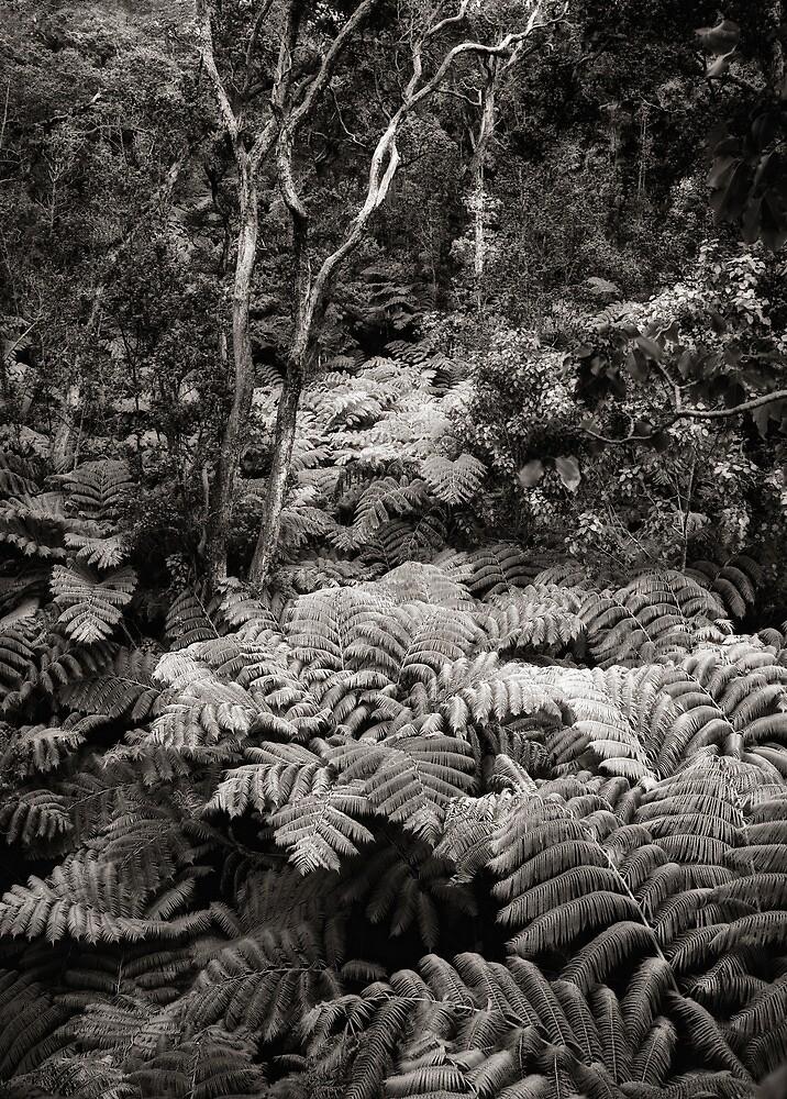 Fern Forest (B&W) by Yves Rubin