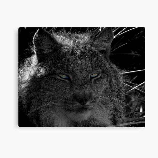 The Missing Lynx Canvas Print