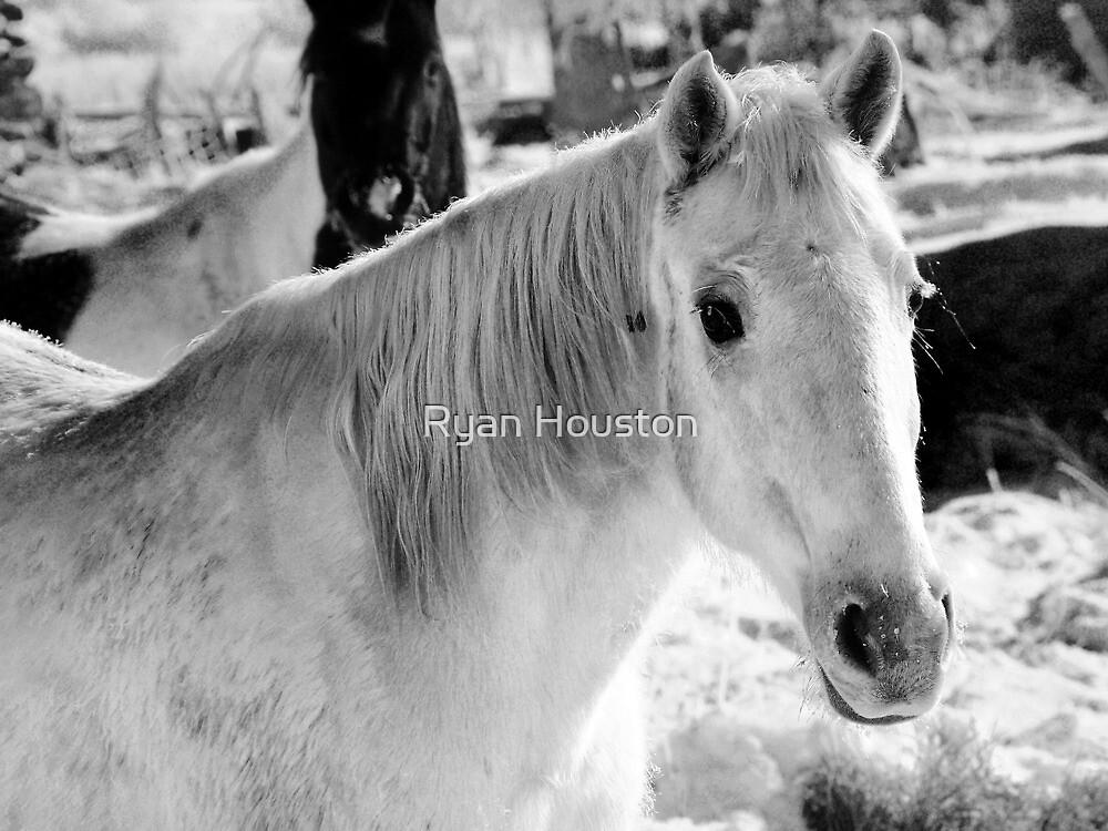 White Frosty Horse by Ryan Houston