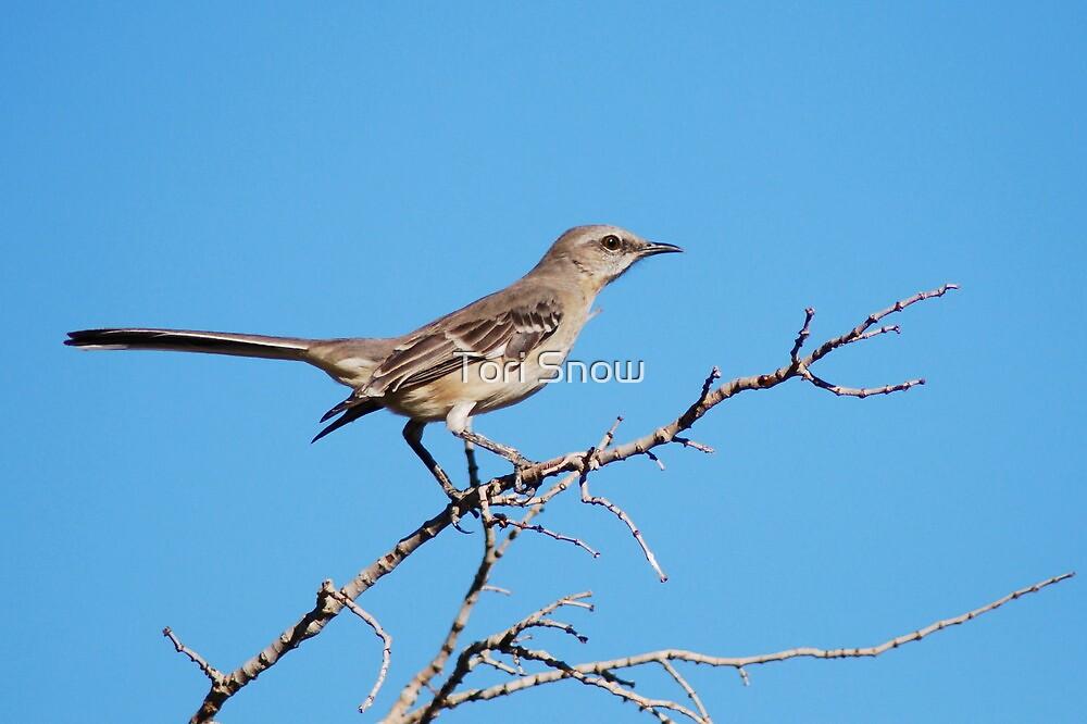 Northern Mockingbird by Tori Snow