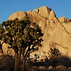 Joshua Tree National Park by Tori Snow