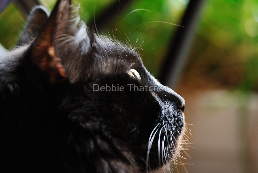 Concentration by Debbie Thatcher