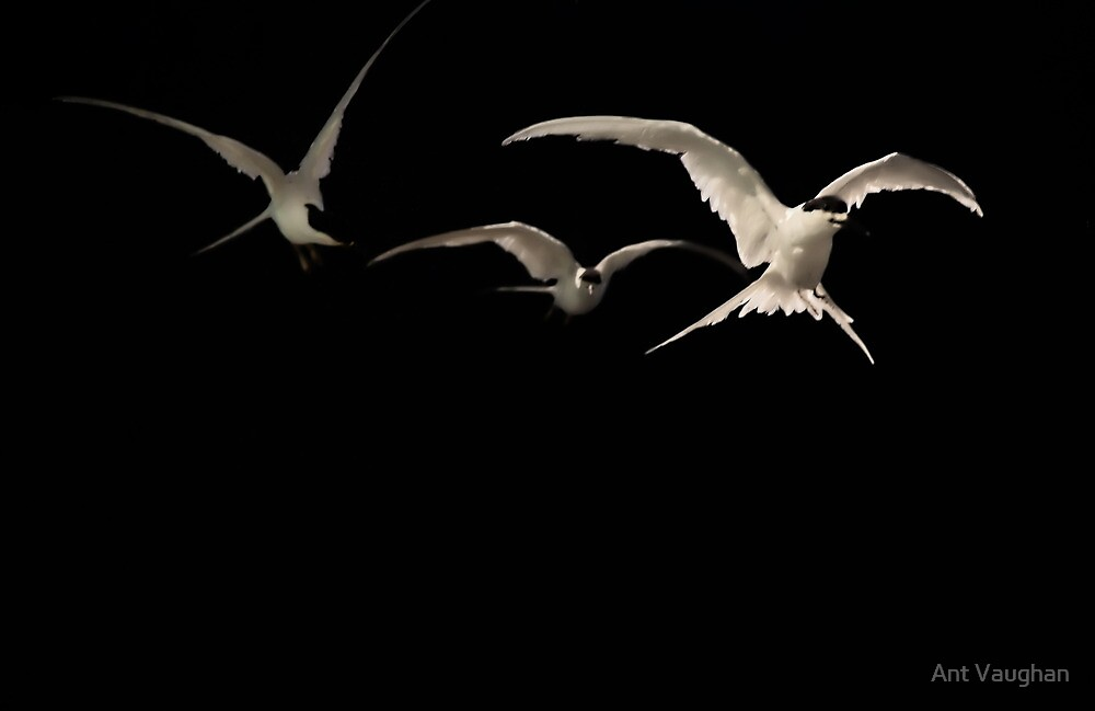 Flight by Ant Vaughan