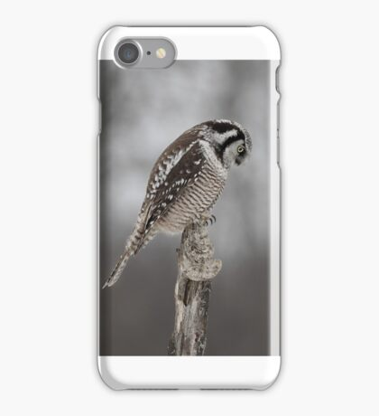 Northern Hawk Owl checks his claws iPhone Case/Skin