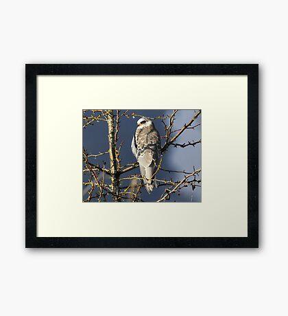 Winter Majesty Framed Print