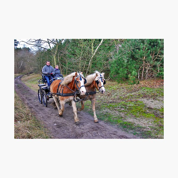 A forest ride Photographic Print