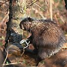 Hope there's still some coffee left....Porcupine by Jim Cumming