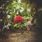 196 - That garden by CarlaSophia