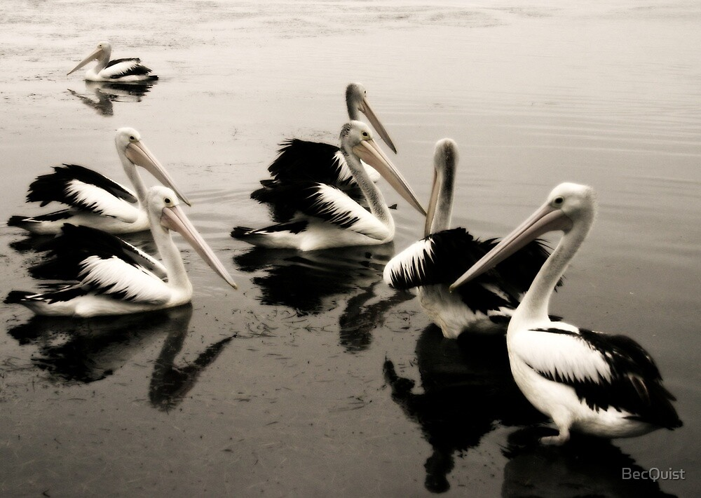 Pelican 3 by BecQuist