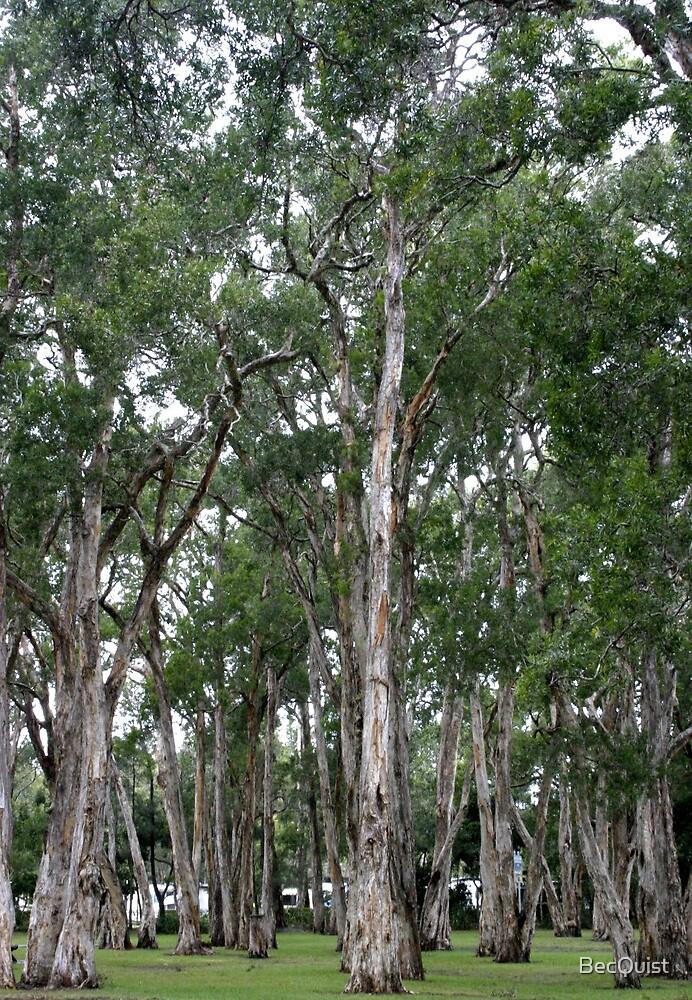 The Australian Gum tree by BecQuist