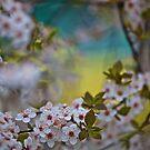 Fascination Spring . Dr.Andrzej Goszcz. by © Andrzej Goszcz,M.D. Ph.D