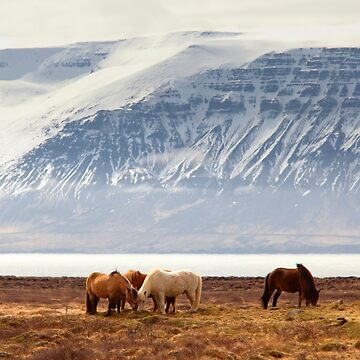 Horses Iceland by SayAhh