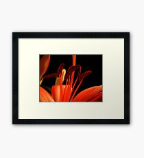 Red Lily macro. Framed Print