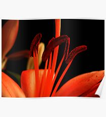 Red Lily macro. Poster