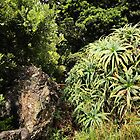all natural plant growing in azores by NightSlown