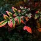 Painted Leaves by Vittorio Zumpano