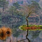 Rydalwater Tree by FyldePhotos
