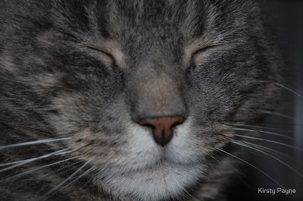 Mr Stinky the Cat  by Kirsty Payne