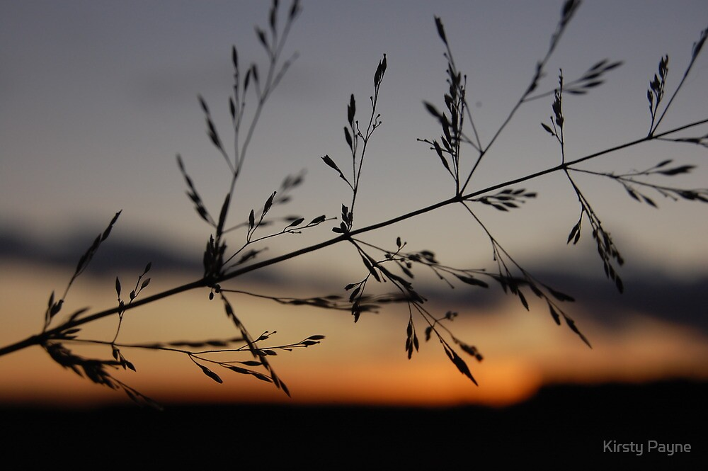 Silhouetted Seeds at Sunset by Kirsty Payne