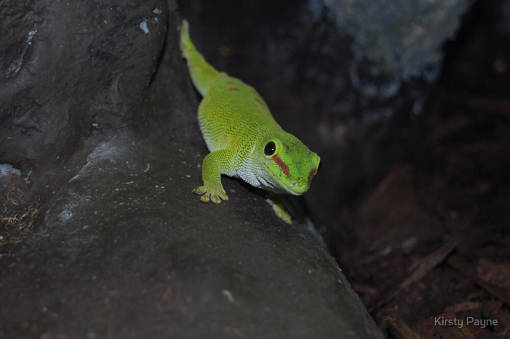 Green Lizard on A Rock. by Kirsty Payne