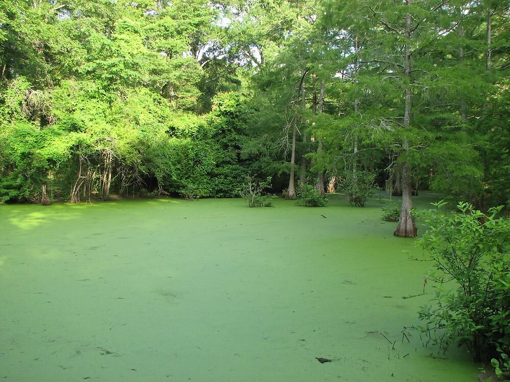 louisana swamp by jack robinson
