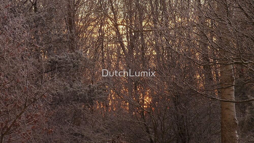 Sunrise through snowy trees by DutchLumix