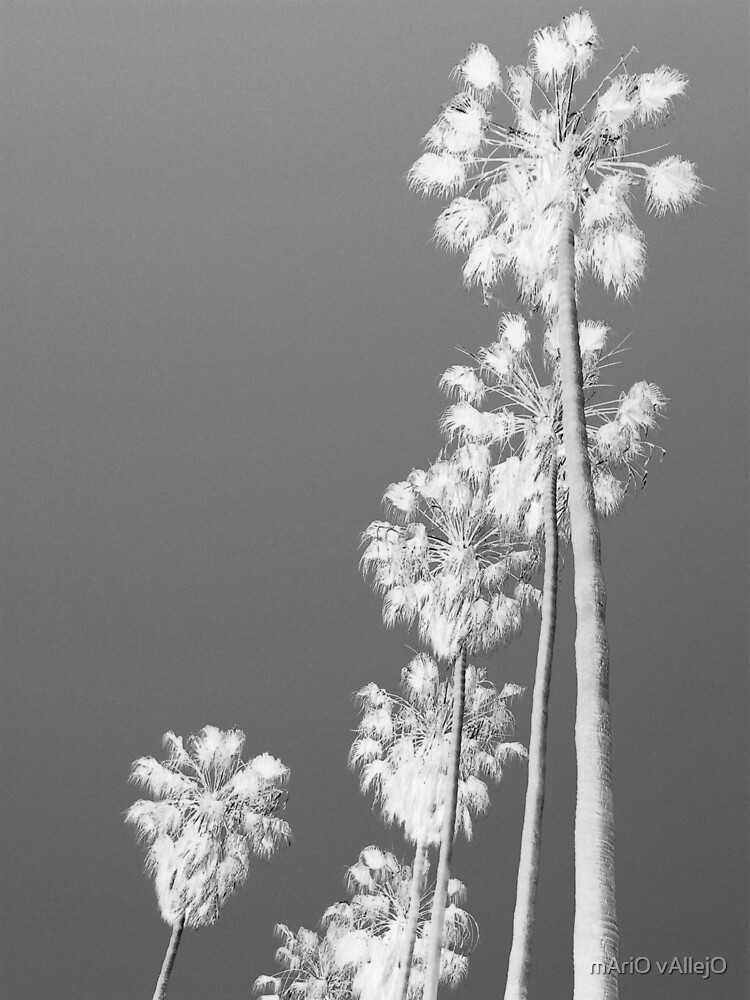 Palm Trees 004 by mAriO vAllejO
